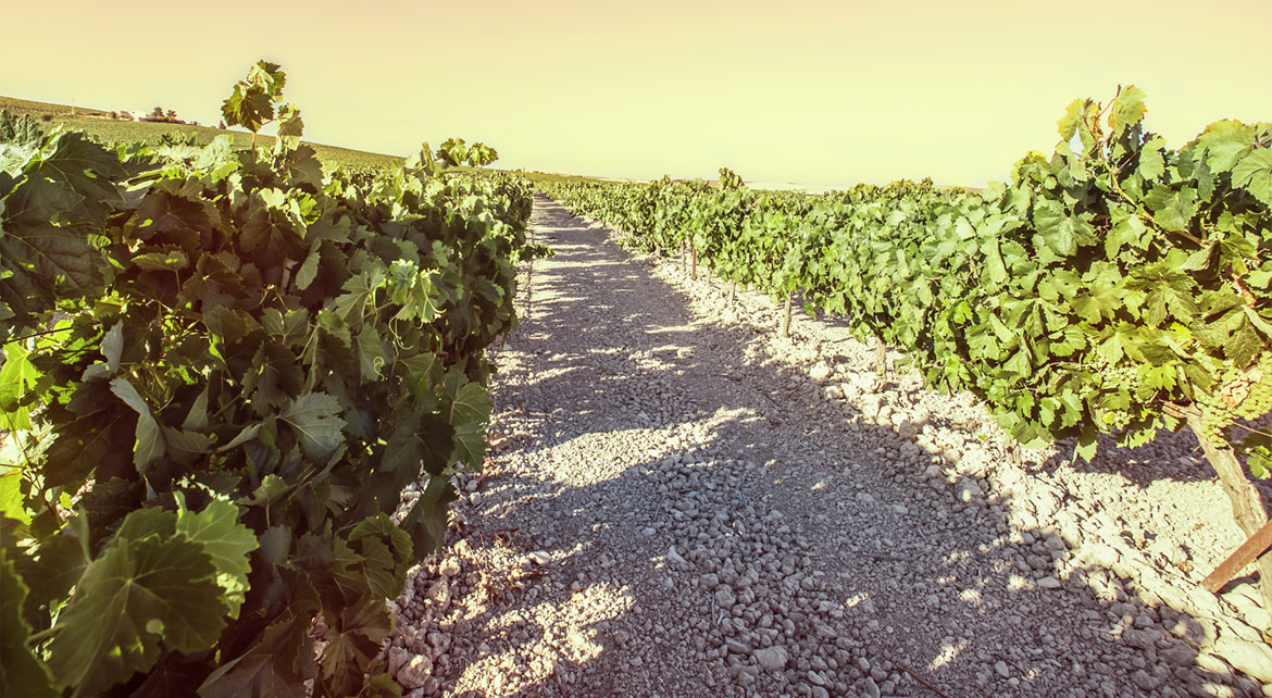 The Sherry wines Triangle tour: a customized experience by Paladar y Tomar