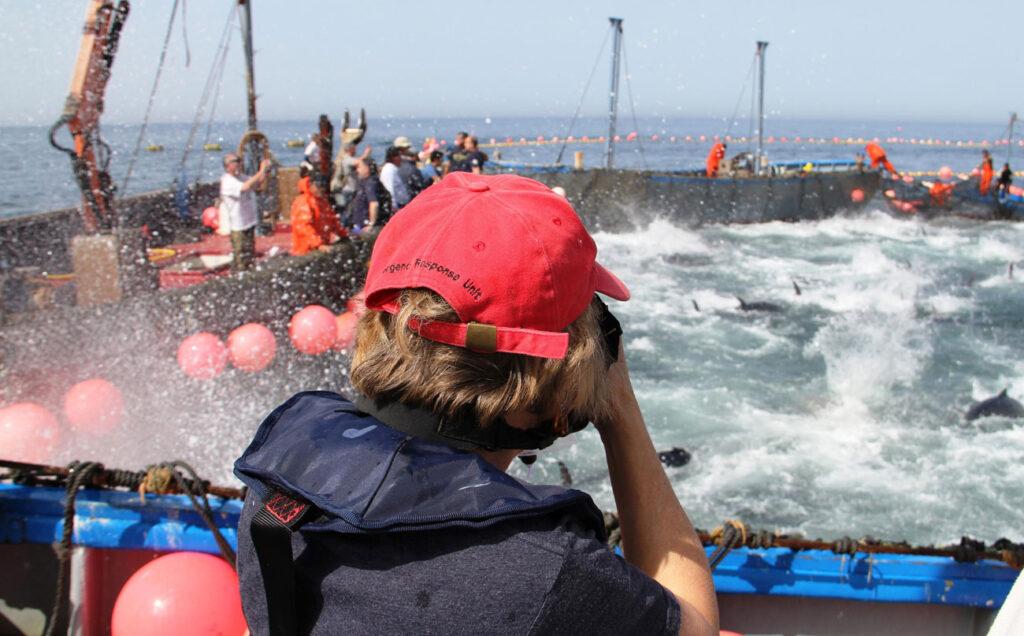 bluefin tuna almadraba experience 3 paladarytomar