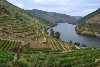 Vineyards in the Douro Valley, a must tour in Portugal