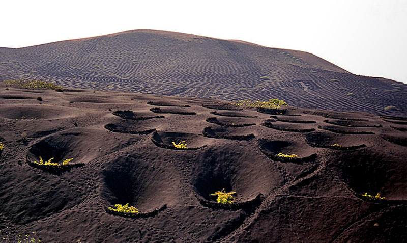 La Geria, lunar vineyards in Lanzarote