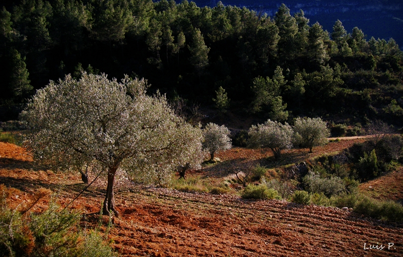 Spanish cuisine and olive oil