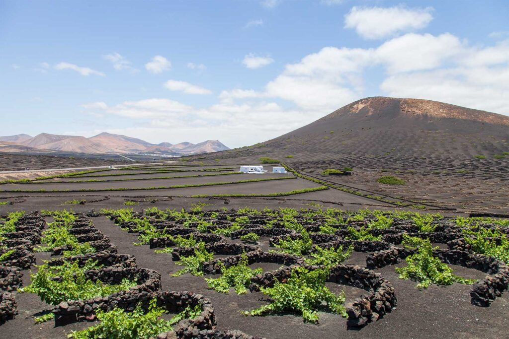 Volcanic vineyards in Lanzarote, we design wine tours in Canary Islands (Contact: Paladar y Tomar)