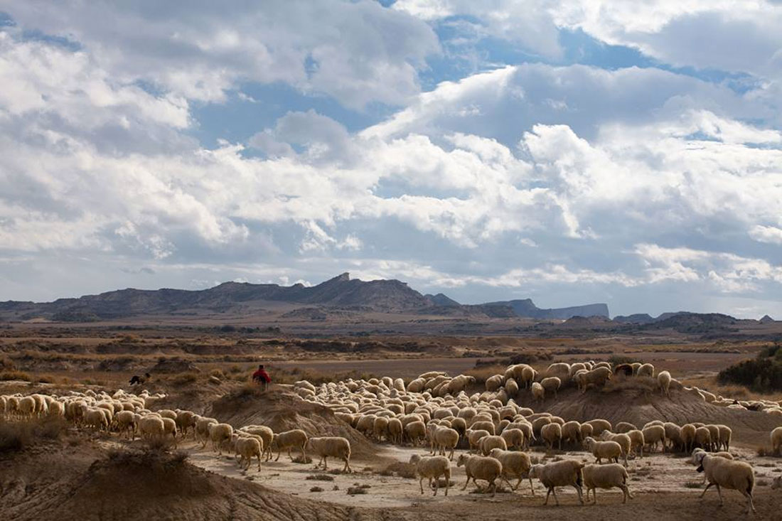 Free range lamb from Navarra, Paladar y Tomar