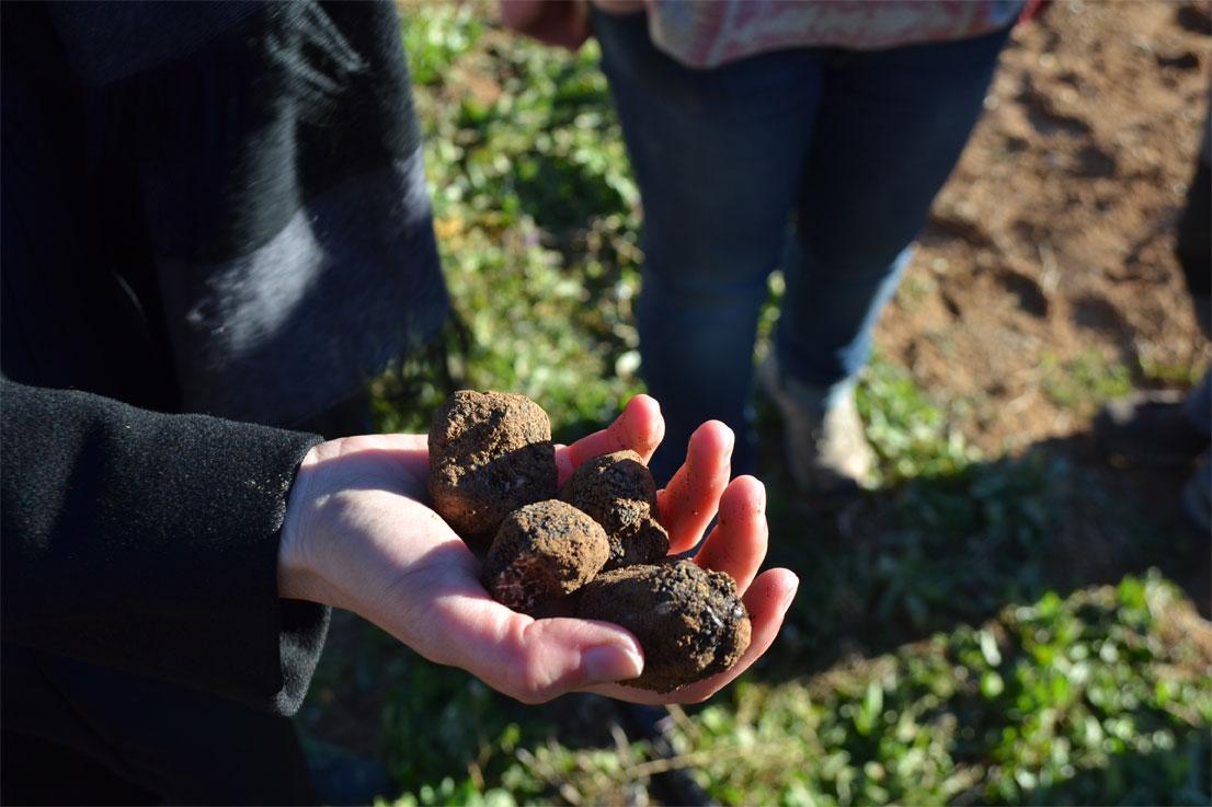 Truffle hunting in Spain, by Paladar y Tomar