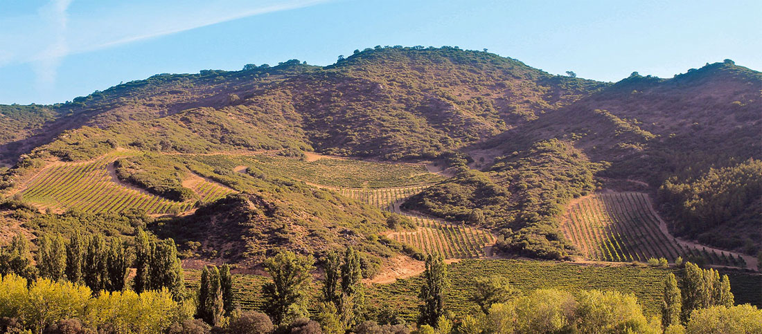 Wines from Navarra, Paladar y Tomar