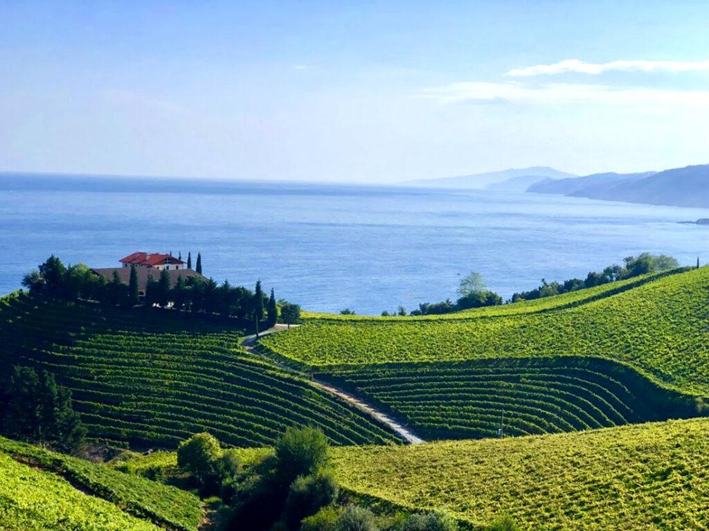 Txakoli wines in Getaria facing the northern sea, Cúrate Trips