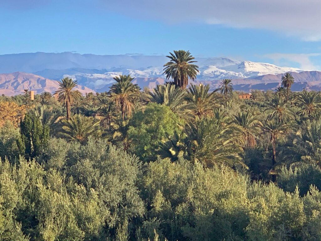 Luxury Morocco with Cúrate Trips, a dream trip by Paladar y Tomar