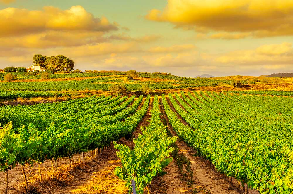 Exclusive Cava tour from Barcelona, a day trip by Paladar y Tomar