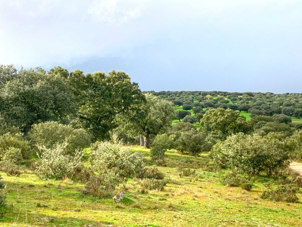 Dehesa, the Mediterranean forest in Spain, Paladar y Tomar