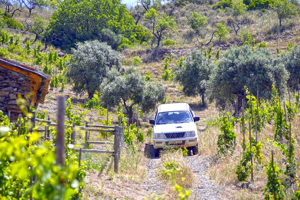 Enjoy a 4x4 tour among the vineyards in Priorat, by Paladar y Tomar