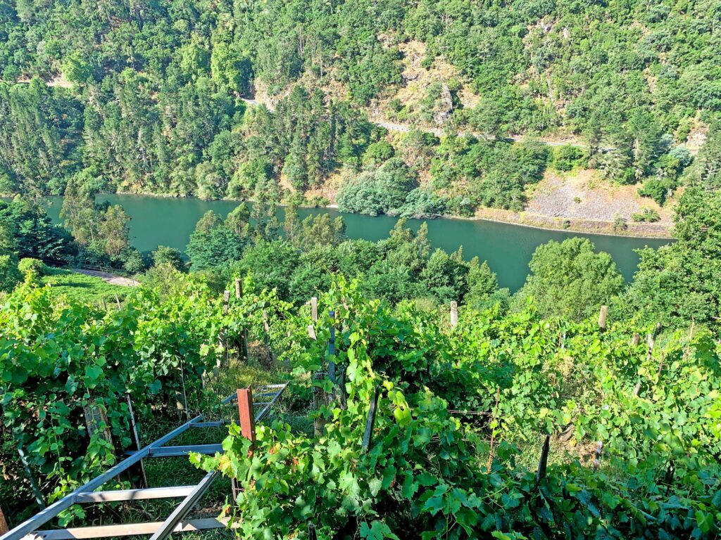 Ribeira Sacra wine tour, an exclusive experience with Paladar y Tomar