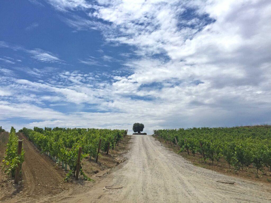 Wines is sacred in Alentejo, Paladar y Tomar takes you to best wineries in totally private visits and premium wine tastings