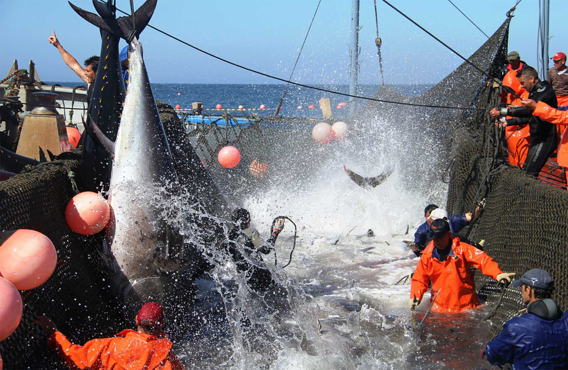 Impressive century-old fishing technique of the bluefin tuna in Southern Spain