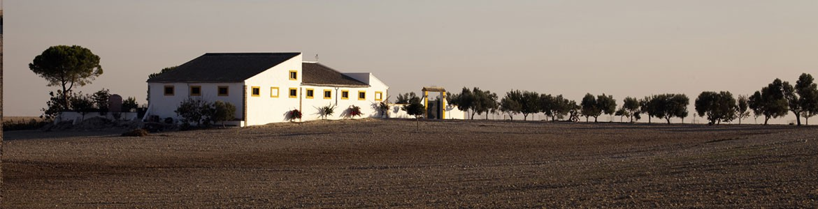 The Sherry Triangle: Jerez, El Puerto and Sanlucar | Paladar y Tomar®