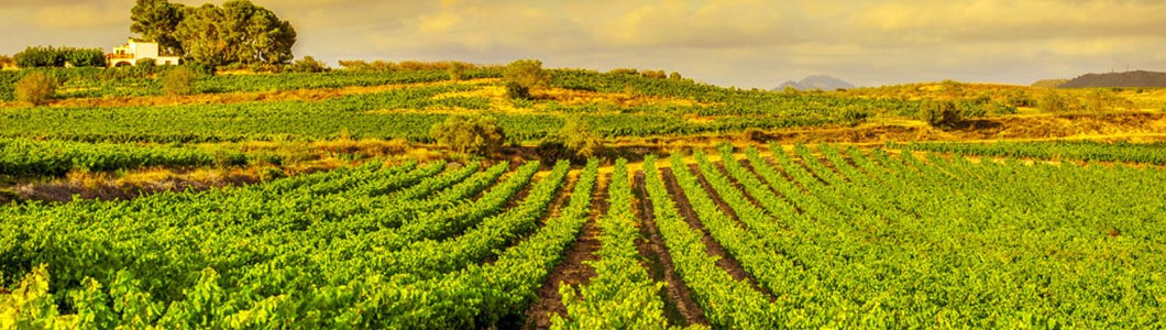 Exclusive cava tours from Barcelona