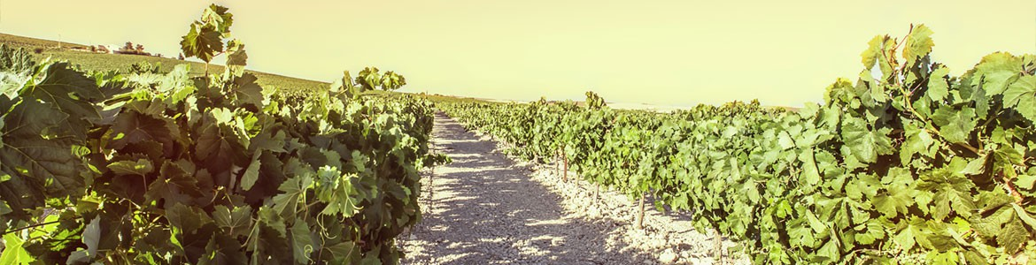 A memorable day in the sherry vineyards | Paladar y Tomar