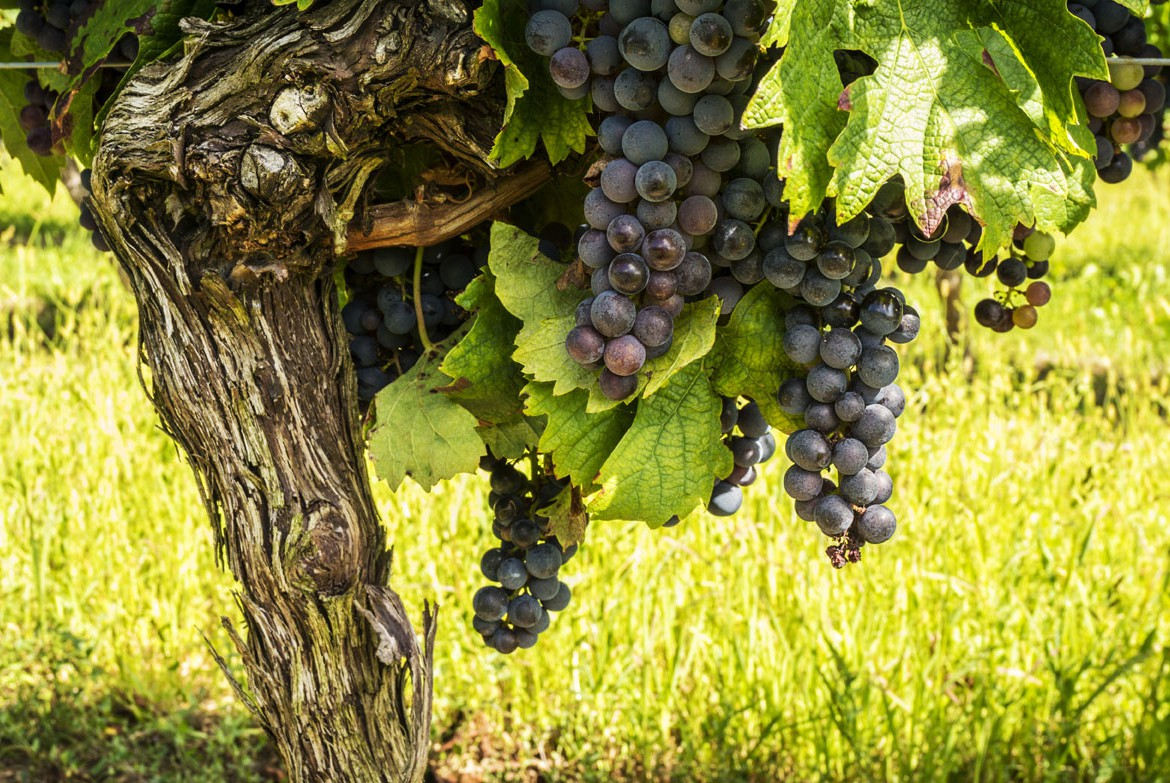Priorat wines are scarce and some of the most expensive Spanish Wines