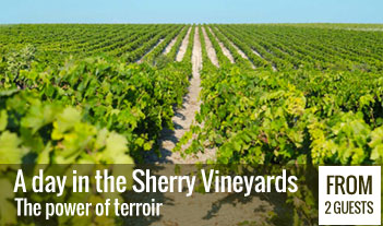 A day in the sherry vineyards: the power of terroir in Jerez