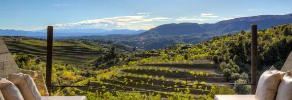 Bespoke Wine tours in Spain by Paladar y Tomar