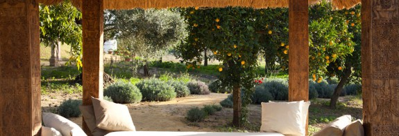 A private cortijo in an olive grove in Andalucia