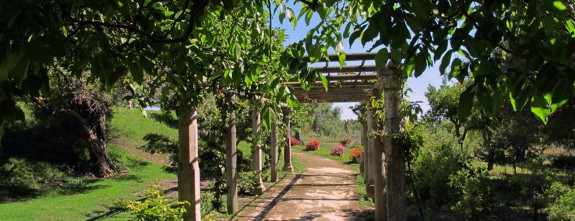 The fabulous garden in the ancient olive grove | Luxury bespoke holidays in Andalusia (Spain)