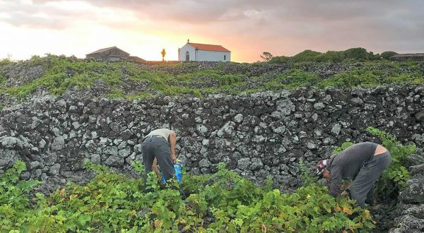 Azores, a lovely Portuguese wine destination to explore with Paladar y Tomar