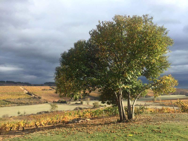 El Bierzo, the Spanish Burgundy wine region, CÚRATE Trips