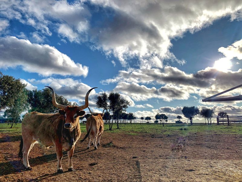 CÚRATE Trips: access the best beef in the world