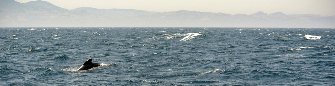Exclusive whale watching in Southern Spain