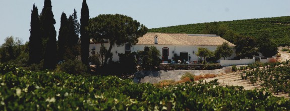 An old vineyard house to enjoy private holidays in Andalusia