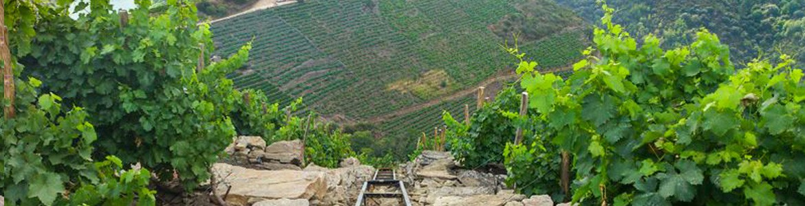 Exclusive tour to Galicia and northwest Spanish wines
