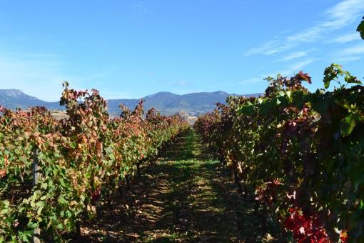 Bespoke Wine Tours Rioja