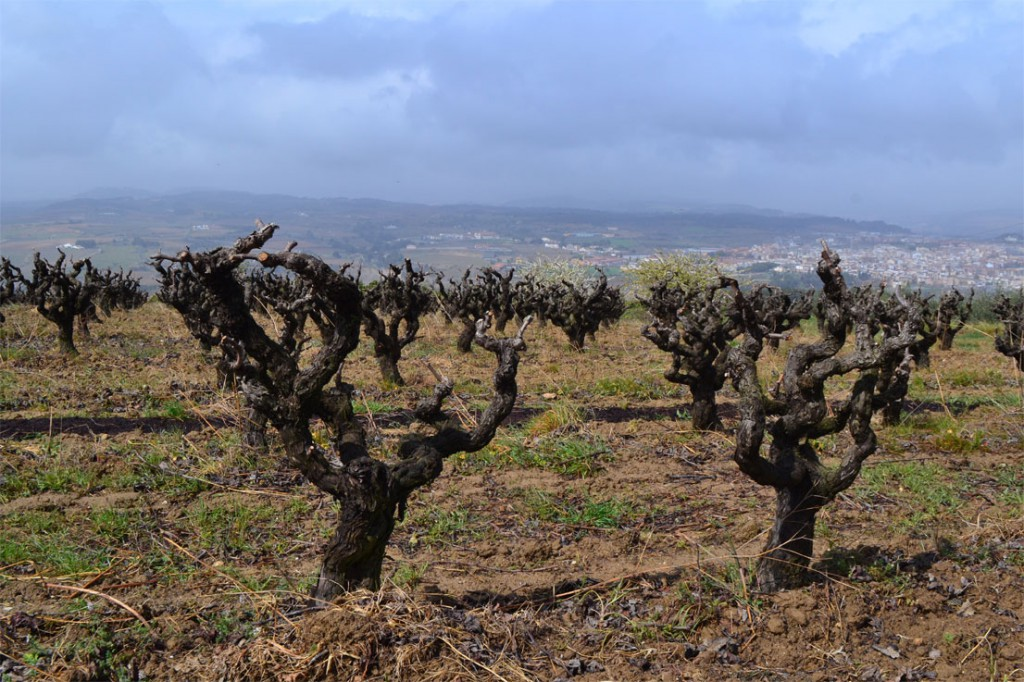 Visiting Penedes vineyards is a memorable experience