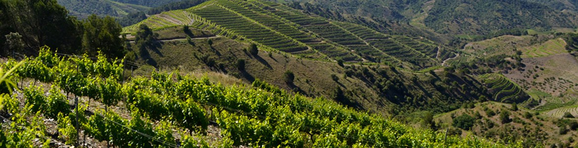 Private wine tours in Priorat: a lifetime experience by Paladar y Tomar®