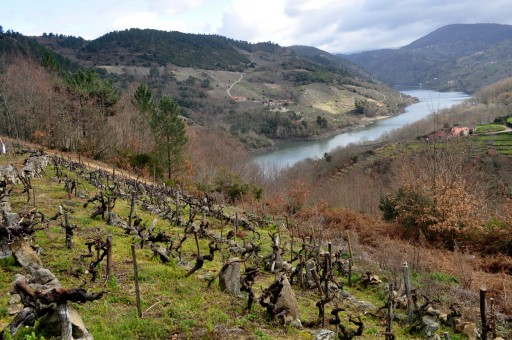 Galicia Exclusive Wine Tours