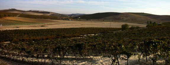 Country house in the vineyards for rough luxury holidays, Jerez de la Frontera
