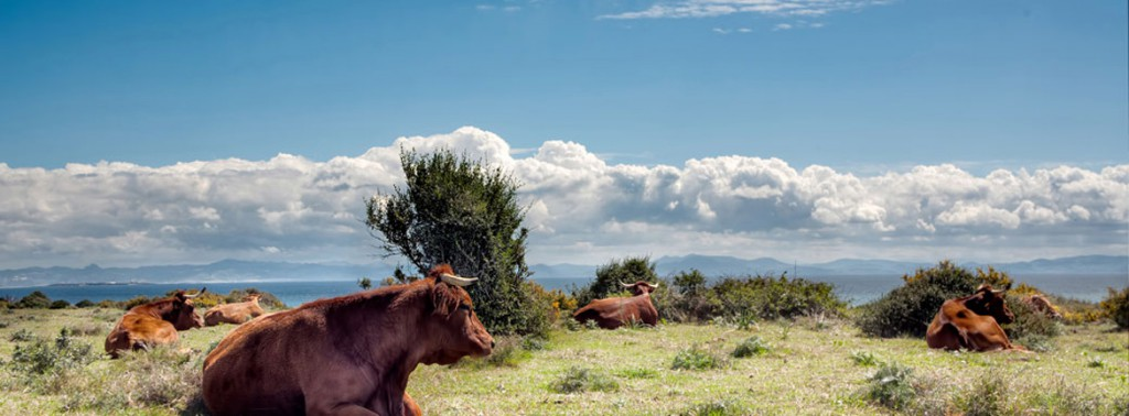 Wildlife luxury tours in Spain & Portugal