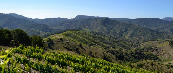 Luxury customized wine tours in Spain